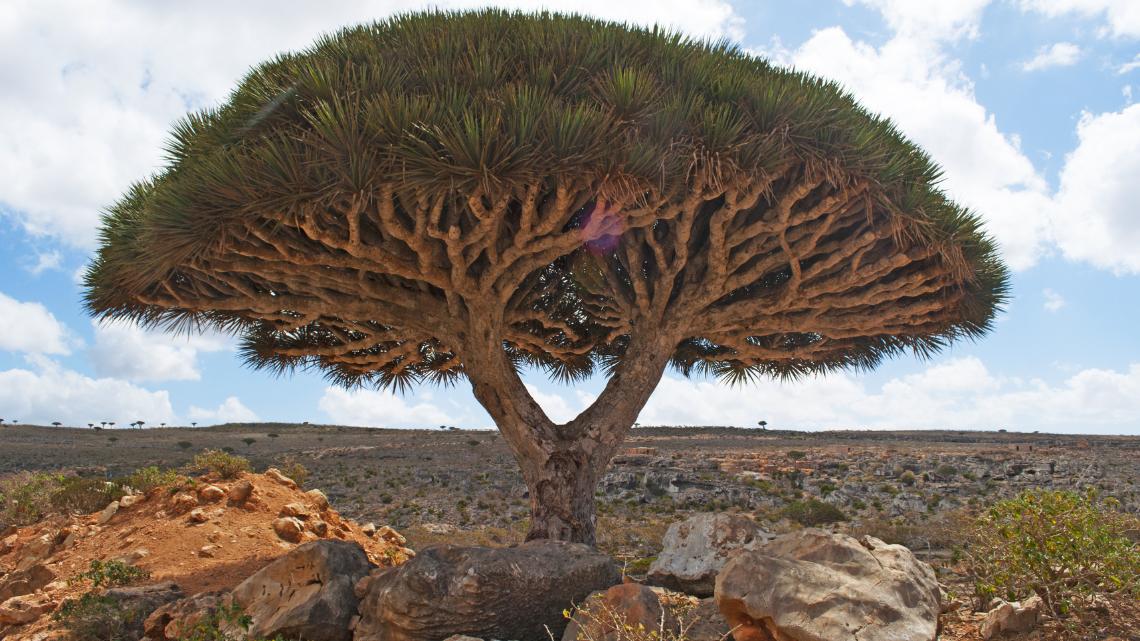 M 12 Socotra